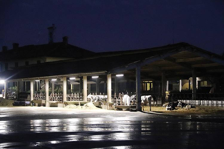 Farm-Led, e luce fu anche per le vacche