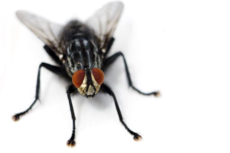 """La lotta alle mosche inizia dalla """"No Fly Zone"""""""