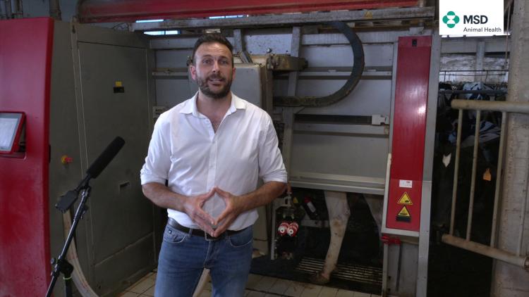 Robot di mungitura e Parmigiano Reggiano: più benessere in stalla