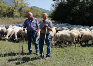 Abruzzo: il nuovo corso dell'ovinicoltura