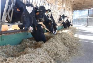Animate<sup>®</sup> per la salute delle vacche in transizione