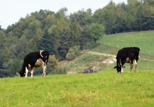 La selezione per le stalle in regime biologico