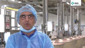 Parmigiano Reggiano e robot di mungitura: le regole da rispettare
