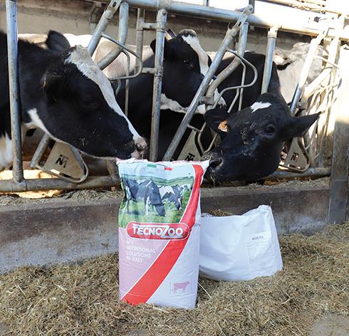 Tecnozoo, bovini da latte, transizione, Anion Booster, metabolismo del calcio