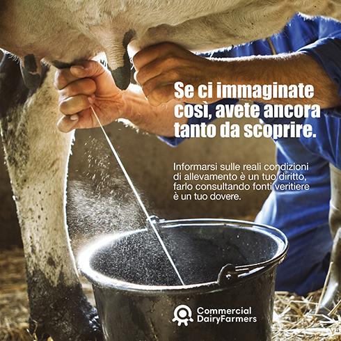 Commercial Dairy Farmers, bovini da latte, fake news, Facebook, allevamento