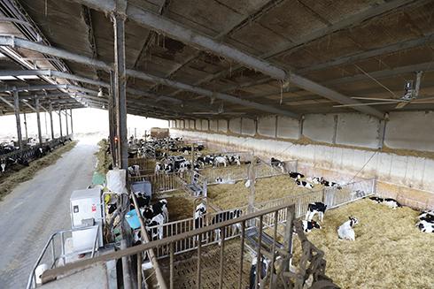 latte, gestione mandria, fertilità, raffrescamento estivo, benessere animale