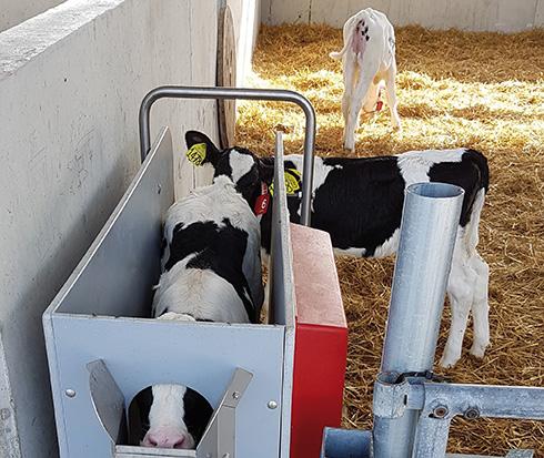 Rota Guido, vitellaia, biosicurezza, comfort animale, automazione