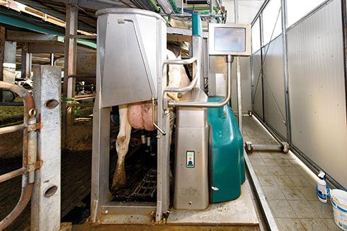 mungitura robotizzata, disciplinare, Parmigiano Reggiano