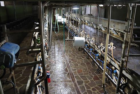 Farm-Led for Breeding, Baronchelli, fossa